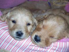 2_puppies.jpg