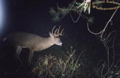 Buck2000alive.jpg
