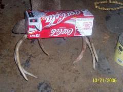 Buck3.jpg