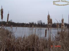 lakeThroughCattails.jpg