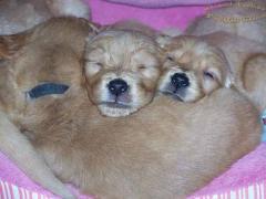 puppies_shrunk_20.jpg