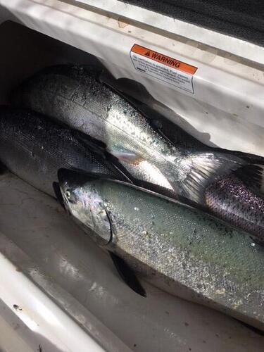 copy of salmon 6-26.jpg
